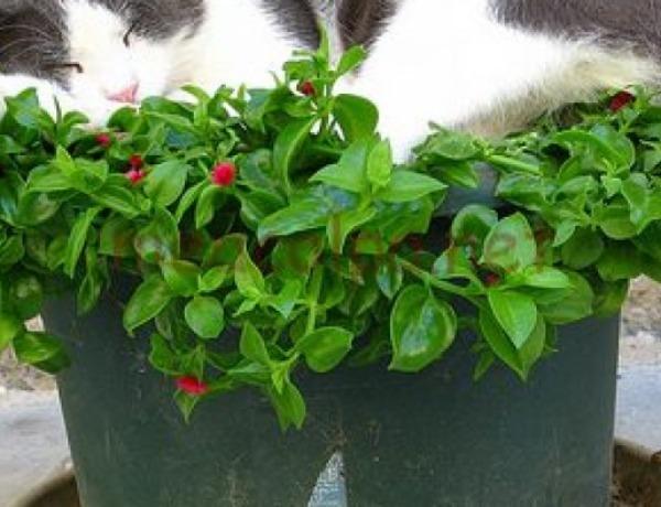 9bc3af076736 Τέλειο κόλπο! Πώς να απομακρύνεις τη γάτα σου από τις γλάστρες του ...