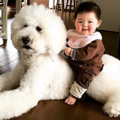 this-baby-and-giant-dogs-friendship-proves-all-yo-2-26887-1501676244-0_dblbig (2)