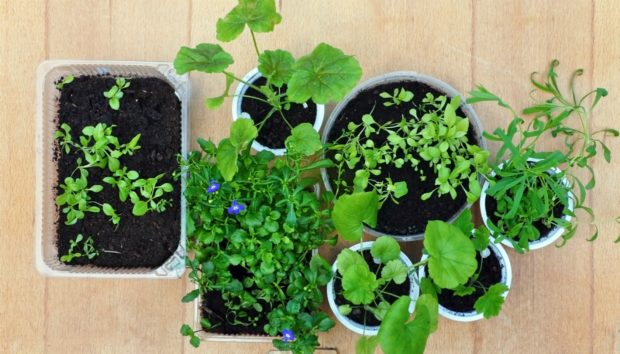 thehomeissue_plants-620x354